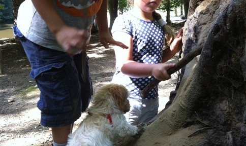Teamwork in the woods at navigating by joy homeschool blog