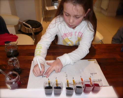 Red cabbage acid base indicator homeschool science