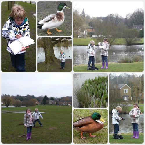 Homeschool pond study collage