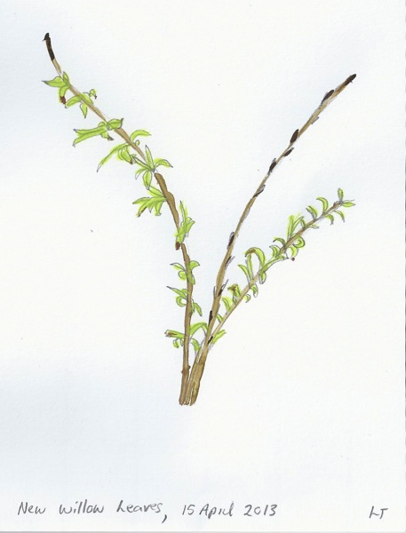 watercolour willow branch - homeschool pond study