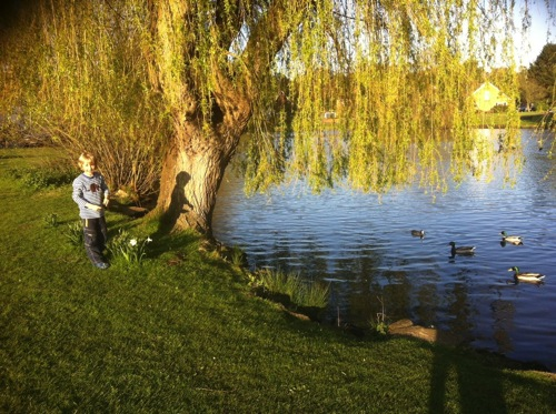 Evening visit to the pond