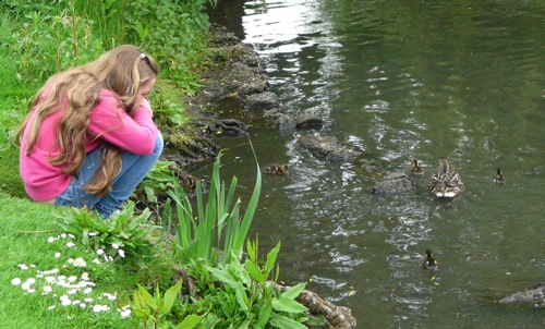 homeschool pond study - ducklings