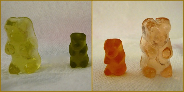 Gummy bear osmosis experiment