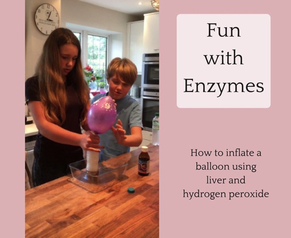 liver and hydrogen peroxide enzyme experiment