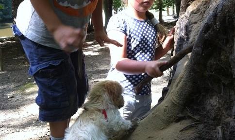Teamwork in the woods at navigating by joy homeschool blog